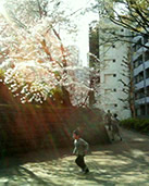 sakura_to_kodomo.jpg