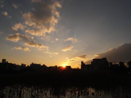 shinobazu.jpg
